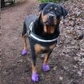 H/Pet Sticky Paws Socks XS orange 4's