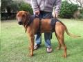 H/Pet Full Body Harness Med