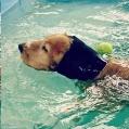 H/Pet Swim Snood Sml