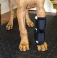 H/Pet Carpal Support Thermomould Lrg