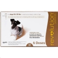 Revolution Dog 12% (5.1-10kg) Brown 3 Pip *