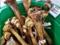 Chew Mini Giant Bone